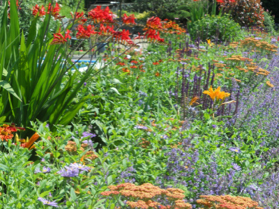 Julia jones garden design garden designer in weybridge for Garden design planting schemes